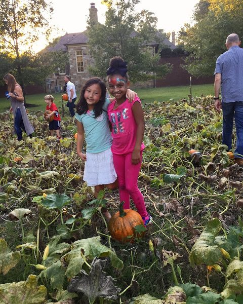 ~ The Great Pumpkin Harvest 2016~