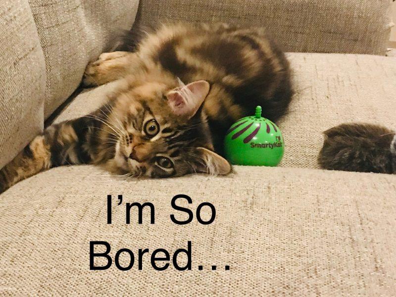 ~I'm So Bored~